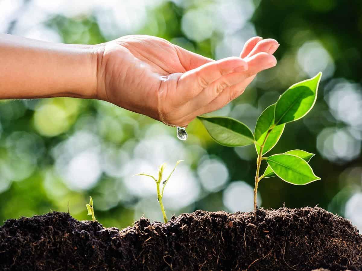 Dłoń podlewa młode rośliny w ziemi Life coaching