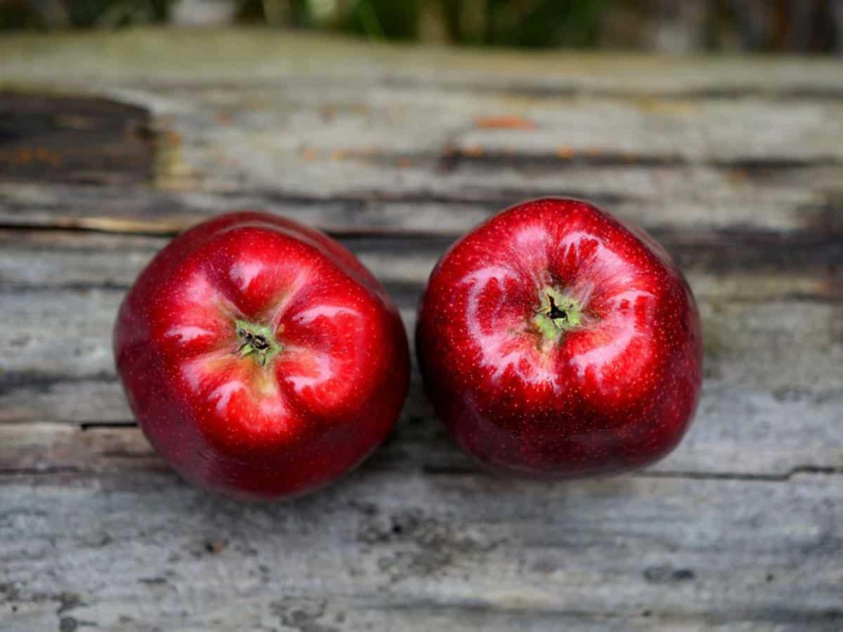 Dwa czerwone jabłka Szkolenia